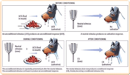 ������ ��������� ( ������� ���������  Classical Conditioning )